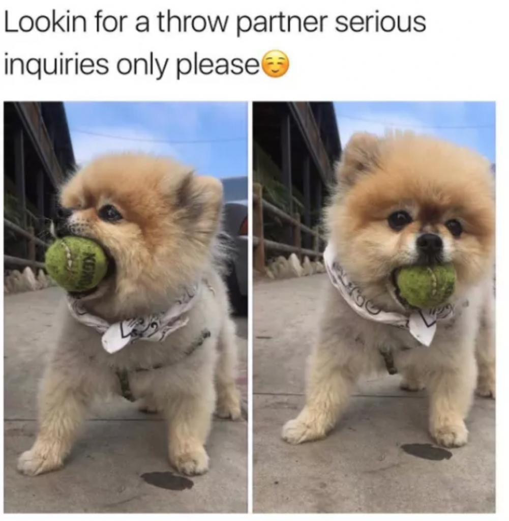 31 Funny Dog Memes That'll Have You In Stitches - PawMyGosh