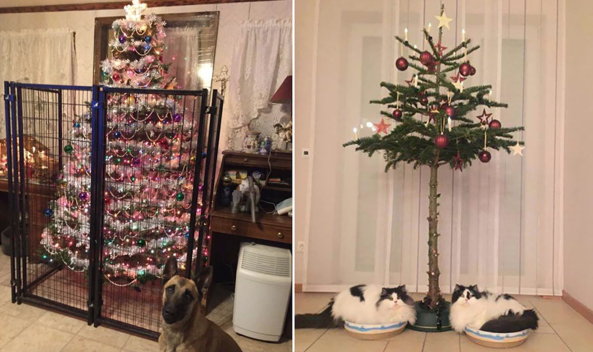 Funny Christmas Tree Ideas