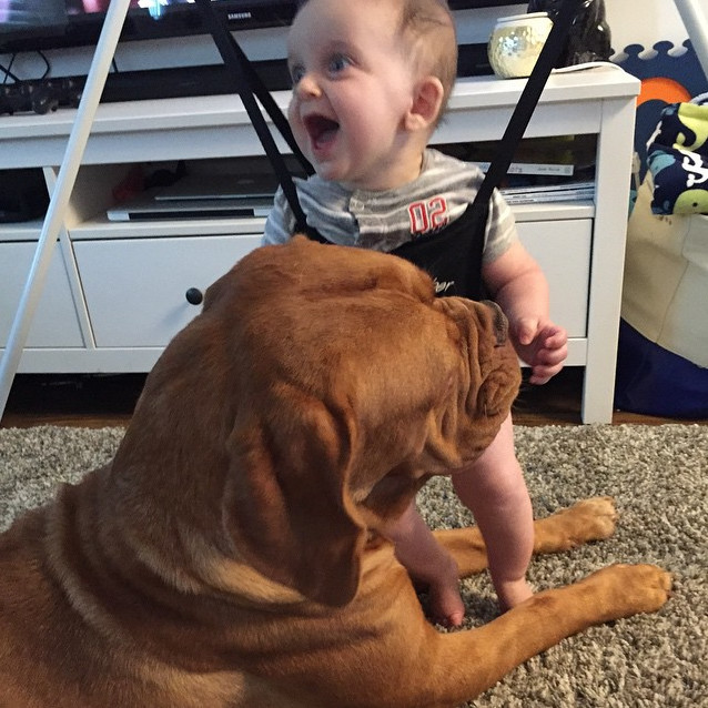 Dogs Make The Best Babysitters