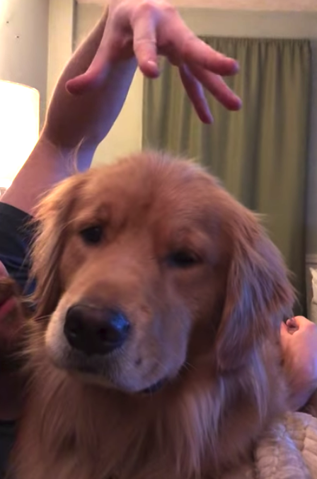 Before Bed Dog Requires Head Scratches To Put Him In